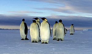 Anjas Pinguin-Homepage